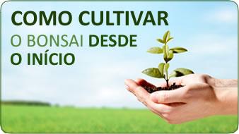 como cultivar o bonsai desde o inicio