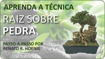 tecnica para o bonsai com raiz sobre pedra