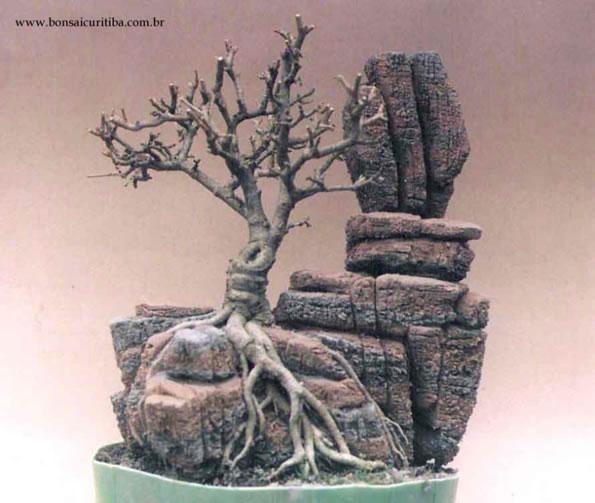 Raiz de Bonsai sobre Pedra - 18