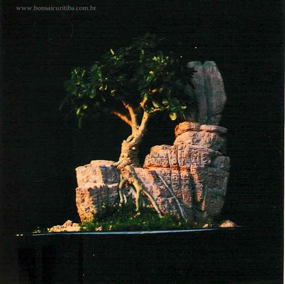 como fica o bonsai com raiz sobre pedra